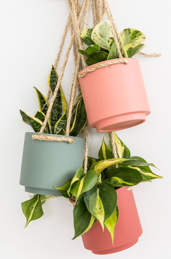 Three Paint 'n Plant Combos For Your Home